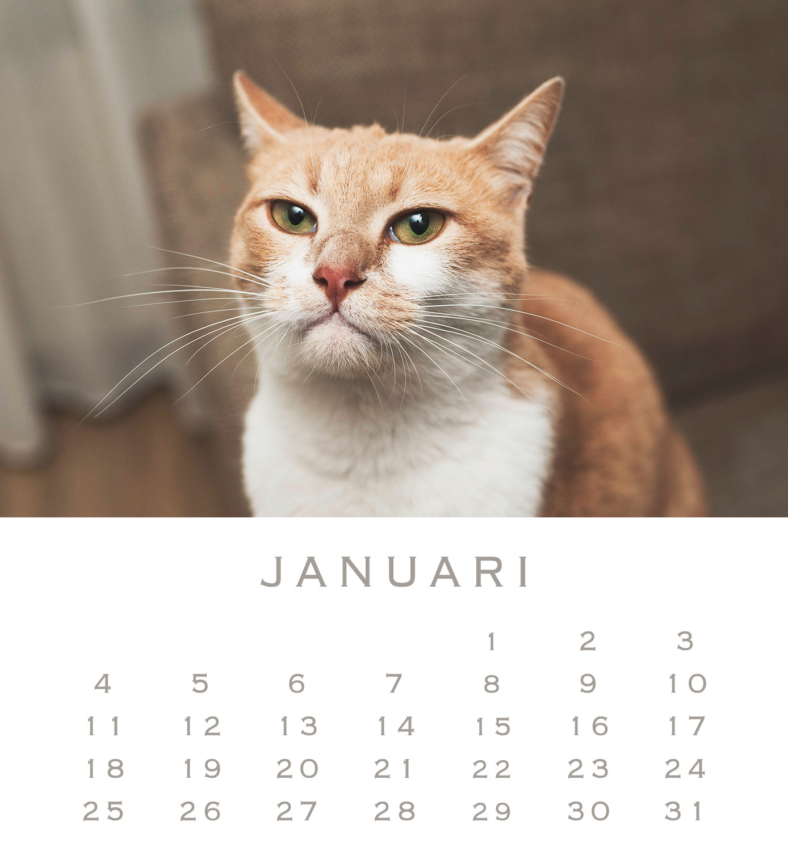 1 Mesho januari 16