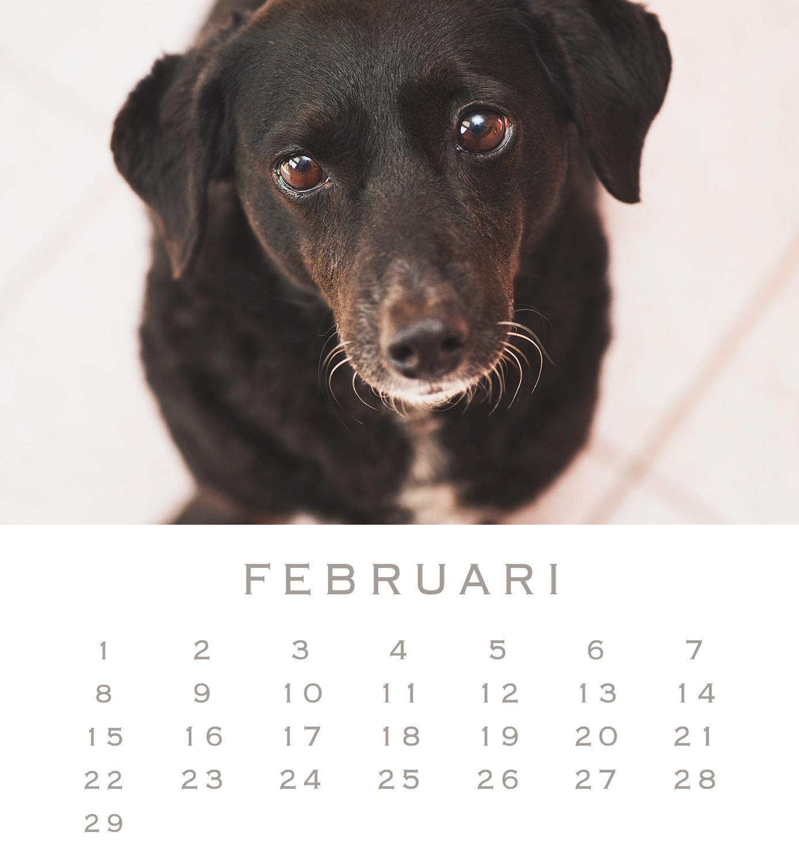 2 Olive februari 16