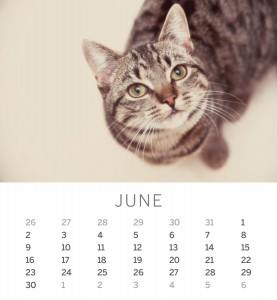 Jofabi 2013 Calendar - June