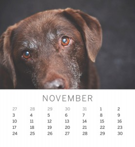 Jofabi 2013 Calendar - November