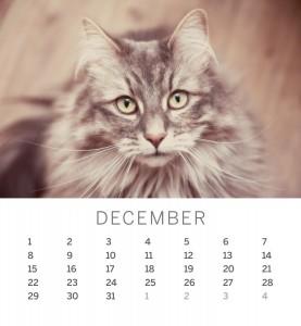 Jofabi 2013 Calendar - December